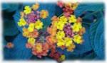 medium_fleurs.2.jpg